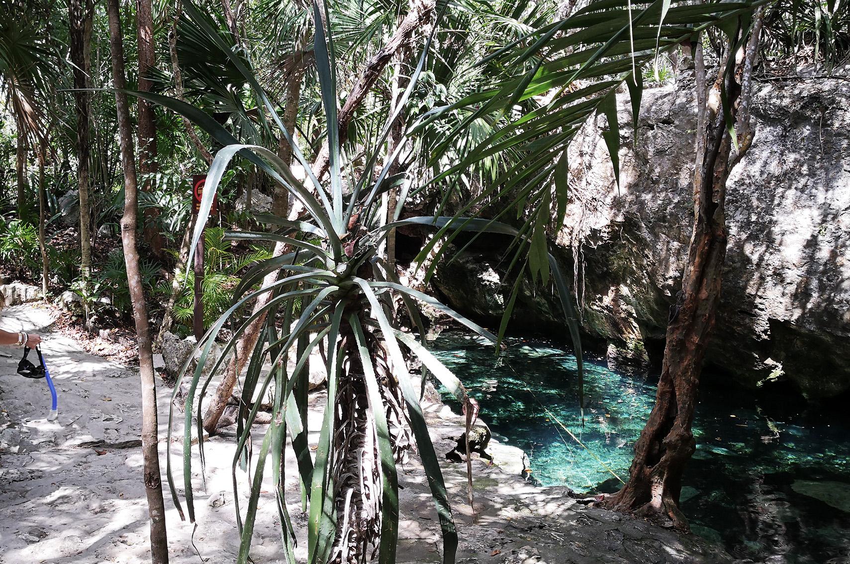 Voyage au Mexique conseils : cenote dos ojos